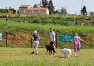 Éducation canine, financée en partie par un don de la CCPA